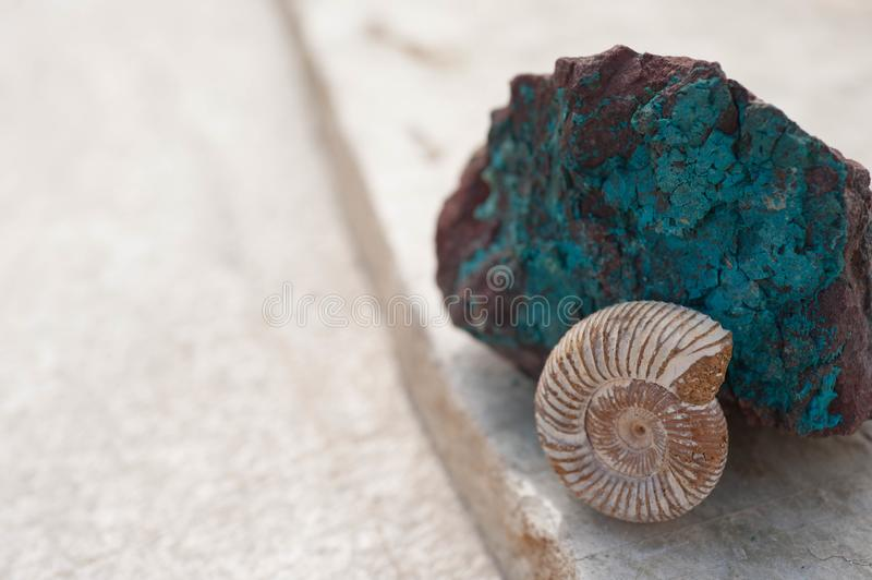 Chrysocolla Stone and Nautilus Fossil royalty free stock photos