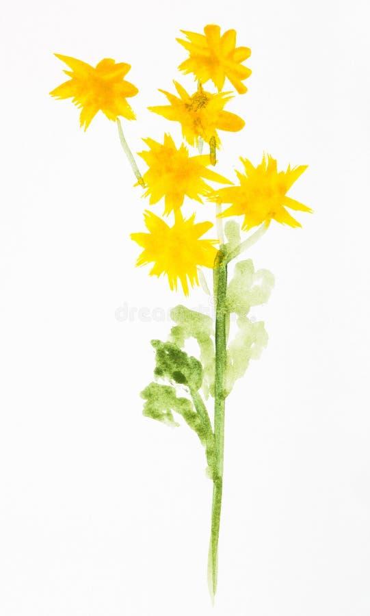 Chryzantema kwiatów ręka malująca na białym papierze ilustracja wektor