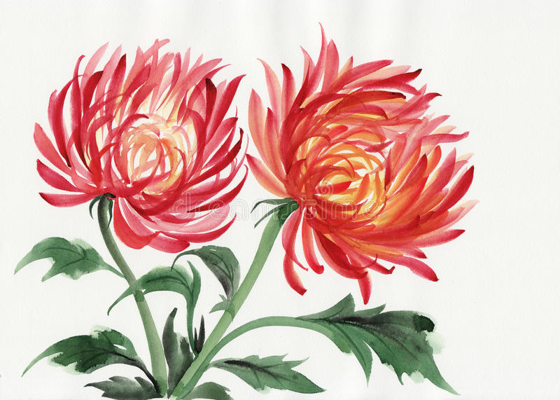 Chryzantema kwiat ilustracja wektor