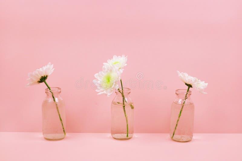 Chryzantemy w szklanej butelce na różowym tle zdjęcia stock