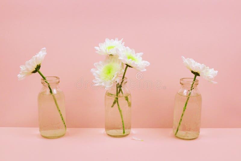 Chryzantemy w szklanej butelce na różowym tle obraz royalty free