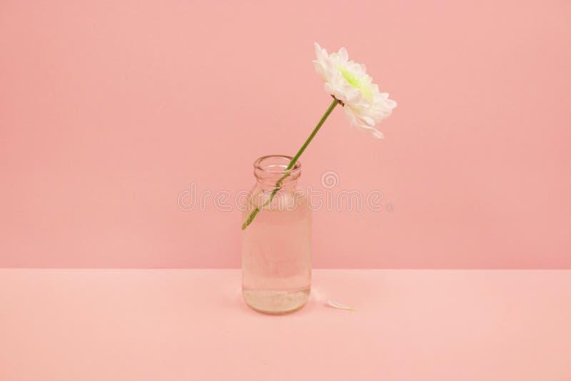 Chryzantemy w szklanej butelce na różowym tle fotografia stock