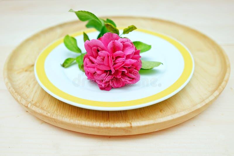 Chubby ρόδινος αυξήθηκε λουλούδι στα διπλά πιάτα στοκ φωτογραφία με δικαίωμα ελεύθερης χρήσης