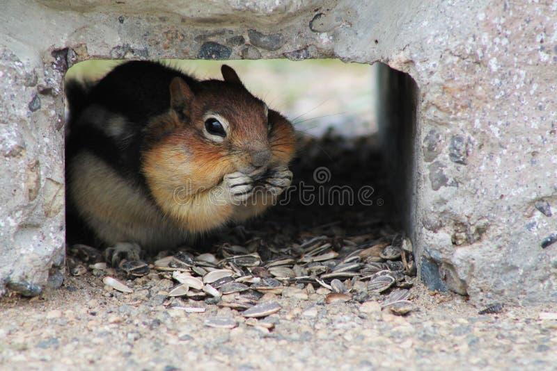 Chubby Cheeks stock photo