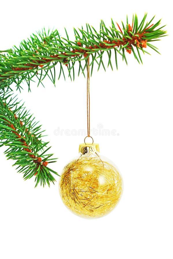 Chuchería de oro de la Navidad del brillo en una ramificación spruce imagen de archivo libre de regalías