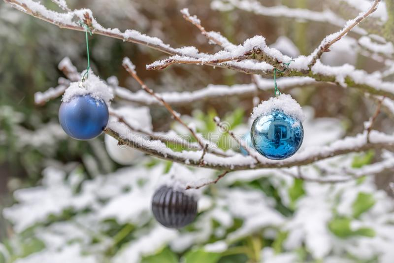 Chucherías de la Navidad cubiertas con la nieve, colgando de una rama de un árbol foto de archivo libre de regalías