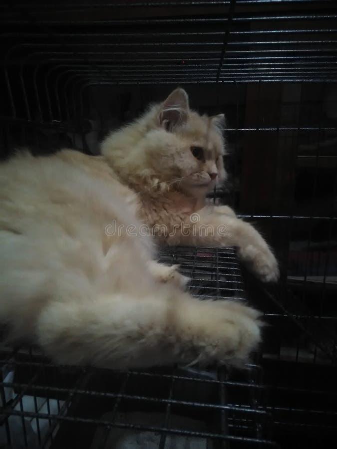 Chucky mijn kat wil een dutje nemen royalty-vrije stock foto
