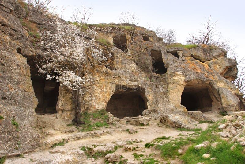 Chufut-Wirsingkohl in Krim stockfoto