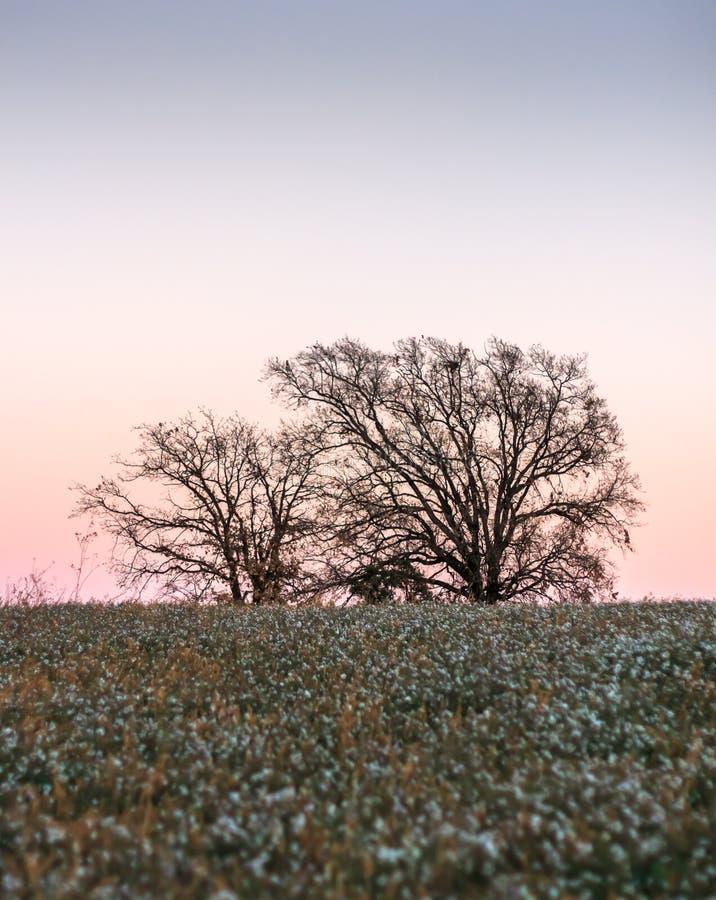 Chują między kwiatów polami drzewa widzią zmierzch przychodzić out obraz royalty free
