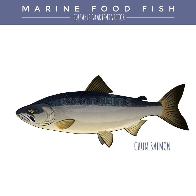 Chum Salmon. Marine Food Fish royalty free illustration