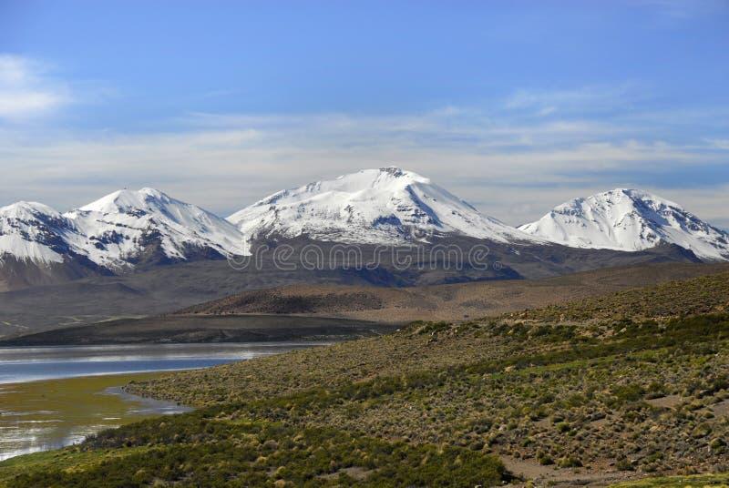 chungara湖lauca国家公园 免版税库存图片