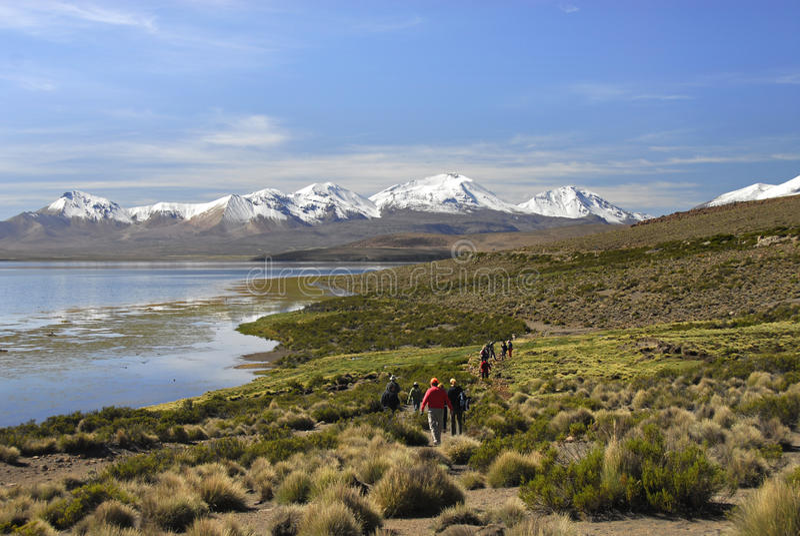 chungara远足者湖lauca国家公园 库存图片