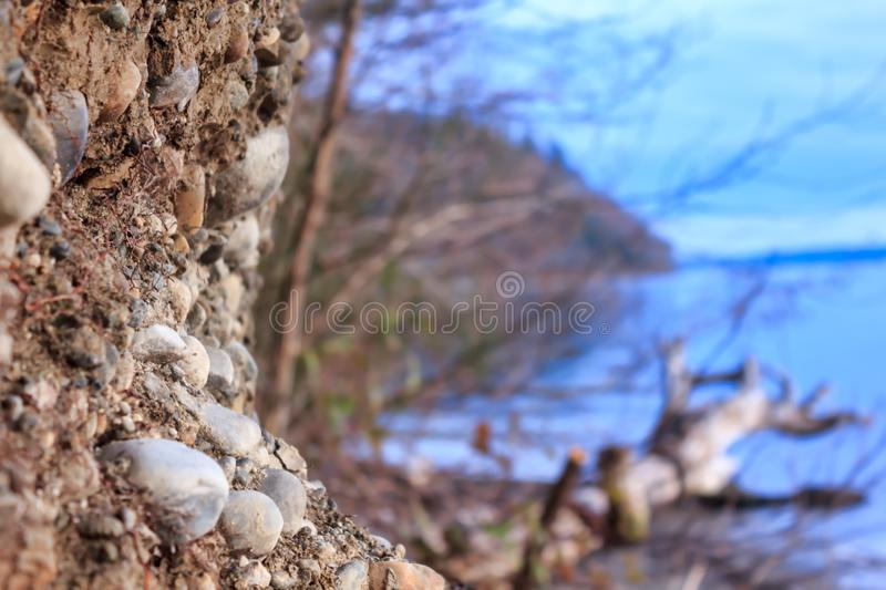 Shore line with trres and driftwood in washington state royalty free stock photography