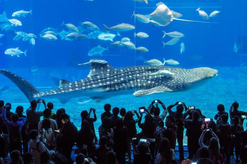 Churaumi水族馆鲸鱼坦克,冲绳岛,日本 免版税图库摄影
