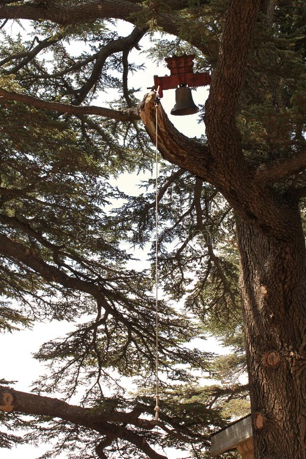 Church Bell and Cedars of God Trees stock image