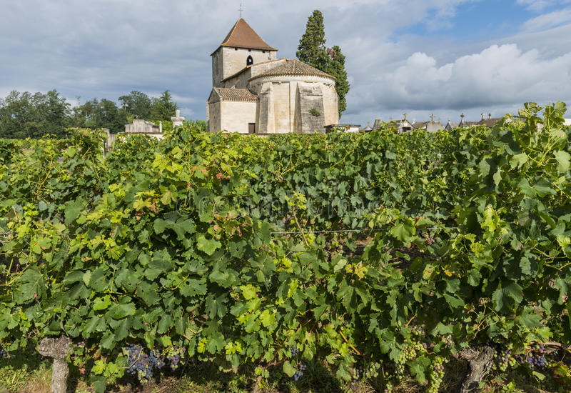 Church and Vinyard of Francs and Tayac. Church tower and vinyard with grapes in the small city of Francs in France royalty free stock photos
