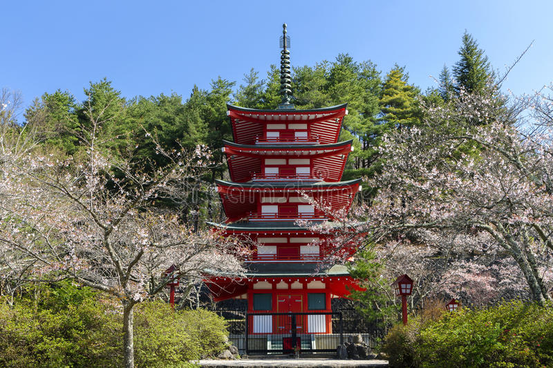 Chureito Pagoda. With cherry blossums stock photography