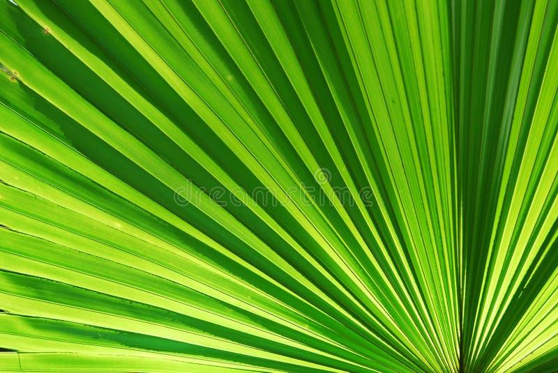Download Chusam stock photo. Image of garden, grass, linear, pattern - 26940218