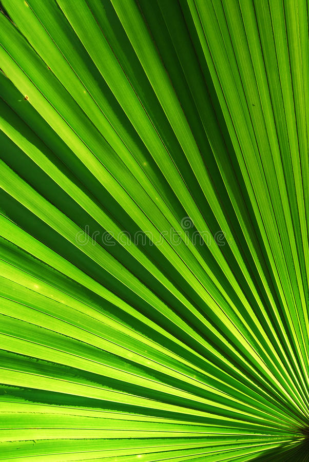 Download Chusam stock image. Image of garden, radiant, fronds - 26940229