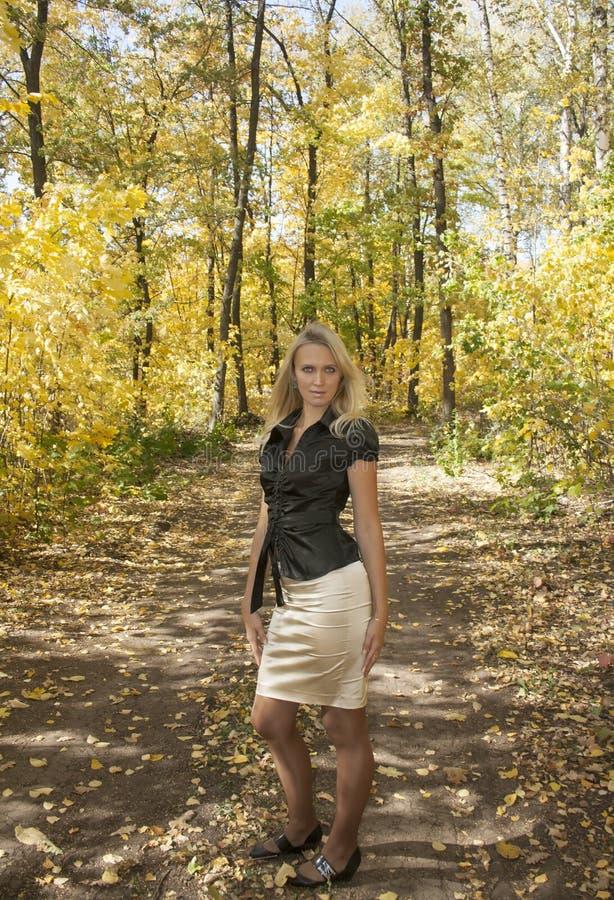 Chute dans la forêt photographie stock
