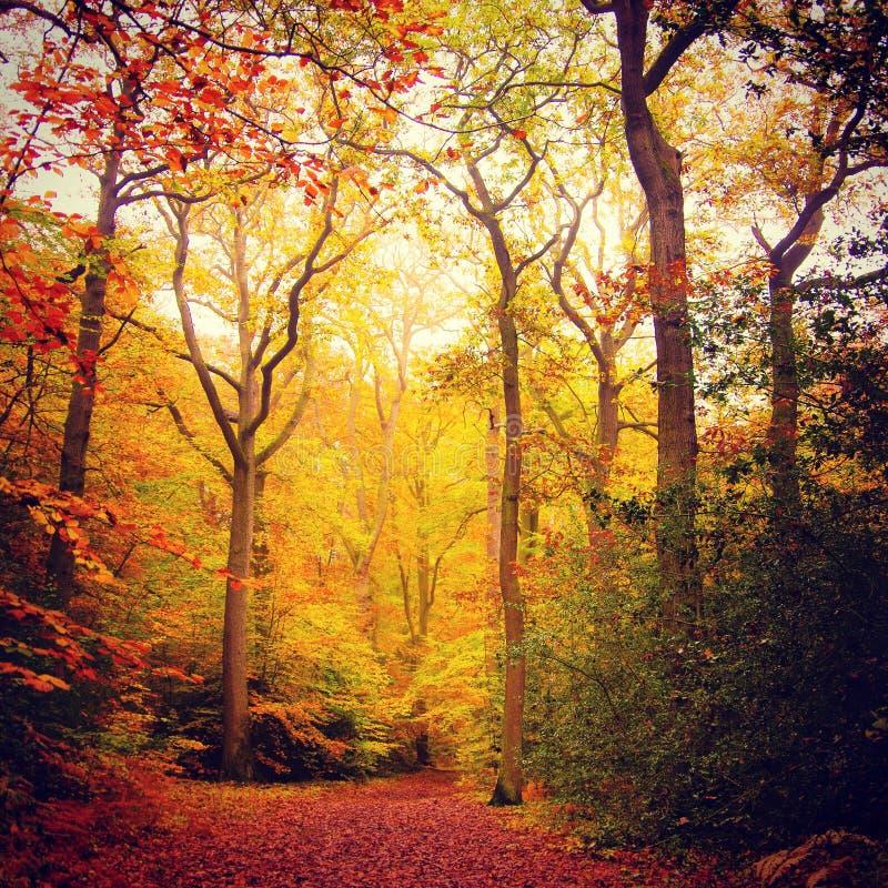 Chute dans les bois de hêtre photo libre de droits