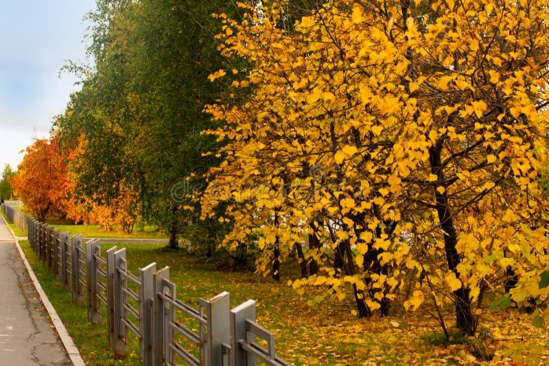 Chute de feuille d'automne dans la ville photo stock