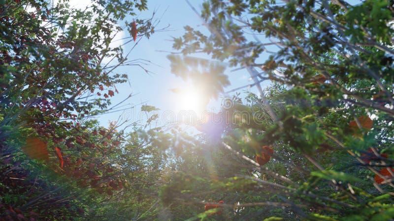 Chute de feuilles d'automne des arbres en parc d'automne Parc color? d'automne un jour ensoleill? rendu 3d illustration de vecteur