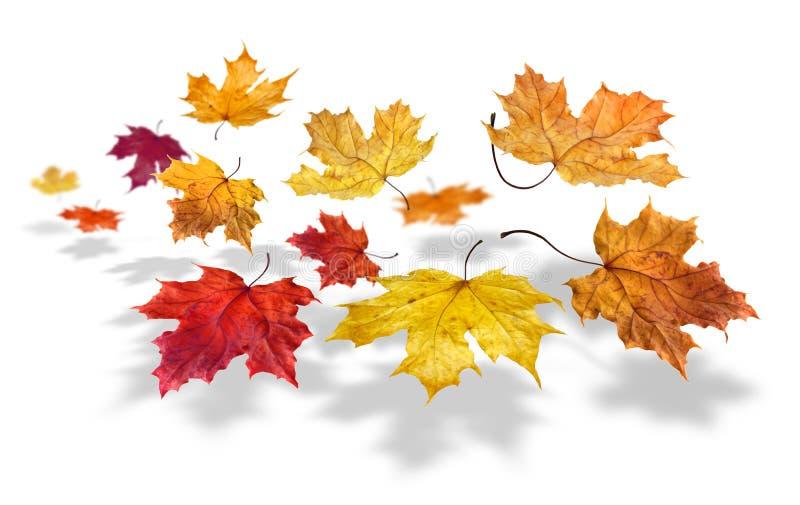 Chute de lames d'automne image stock