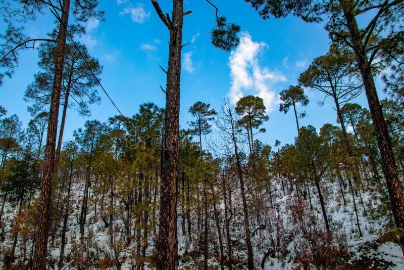 Chute de neige dans le domaine de ferme du secteur de collines avec des arbres au-dessus des nuages blancs et du ciel bleu, beau  images libres de droits