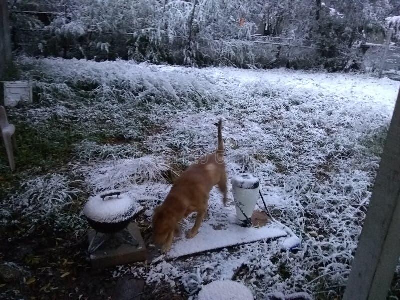 Chute de neige dans le tx de Corpus Christi image stock