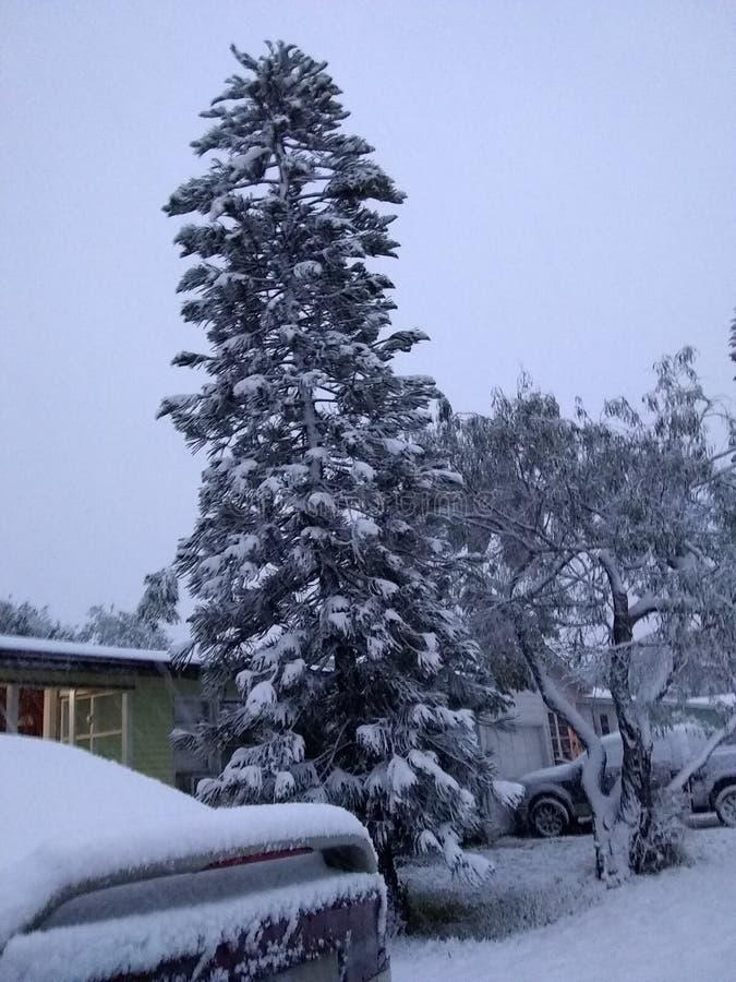 Chute de neige dans le tx de Corpus Christi images libres de droits