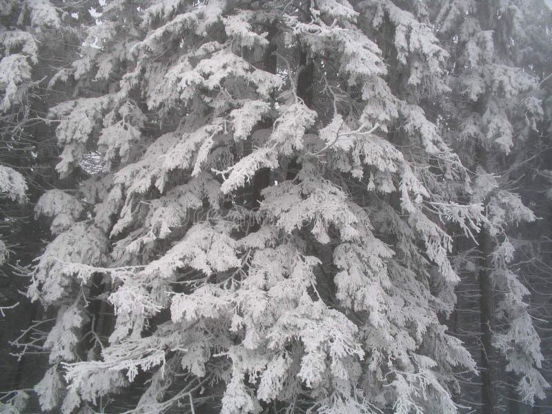 Chute de neige importante sur des arbres photographie stock
