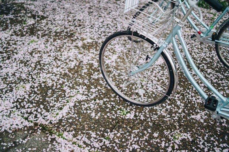 Chute de Sakura sur le vélo image stock