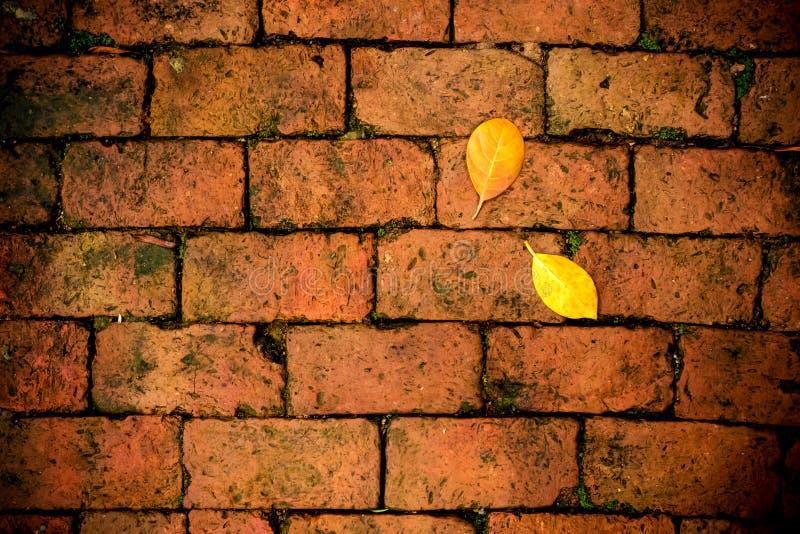 Chute jaune de feuille sur le plancher de brique rouge photographie stock libre de droits
