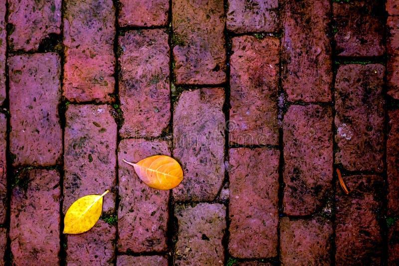 Chute jaune de feuille sur le plancher de brique rouge images stock