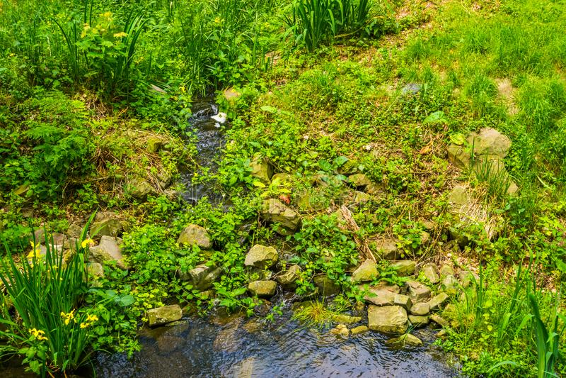 Chute minuscule de l'eau entourée par des roches et des usines dans un beau jardin, fond de nature photo stock