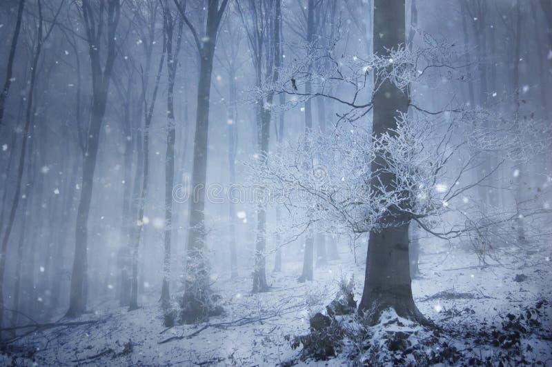 Chutes de neige dans une forêt magique avec un vieil arbre énorme photo libre de droits