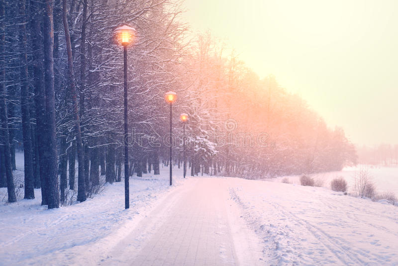 Chutes de neige en parc photographie stock libre de droits