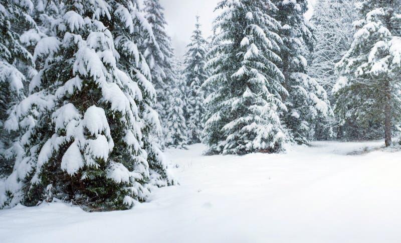 Chutes de neige de fureur dans les arbres de Milou de forêt de féerie d'hiver dans le paysage fabuleux d'hiver photo stock