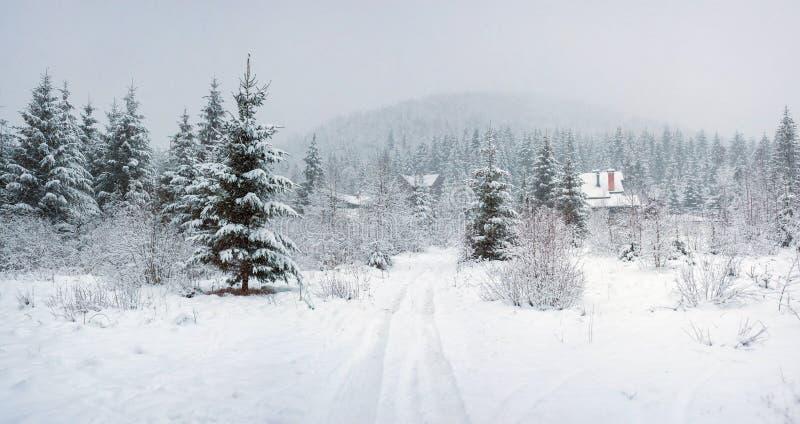 Chutes de neige de fureur dans les arbres de Milou de forêt de féerie d'hiver dans le paysage fabuleux d'hiver photo libre de droits