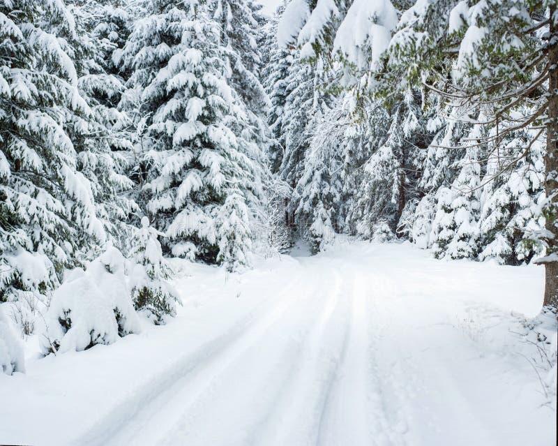 Chutes de neige de fureur dans les arbres de Milou de forêt de féerie d'hiver dans le paysage fabuleux d'hiver photographie stock