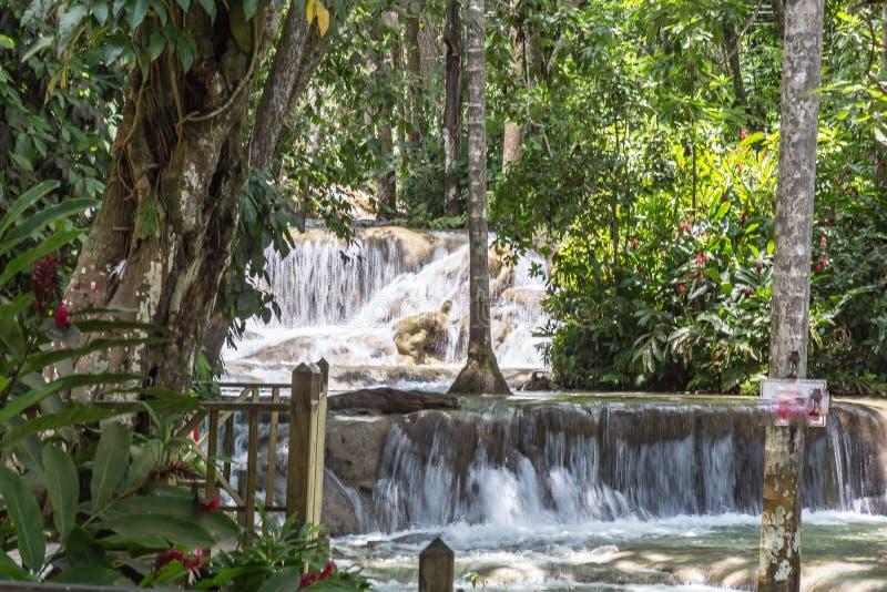 Chutes Jamaïque les Antilles de rivière de Dunn image libre de droits