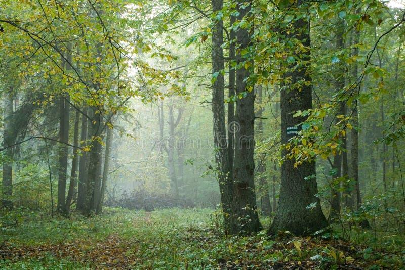 Chuva da fuga da floresta em seguida foto de stock royalty free