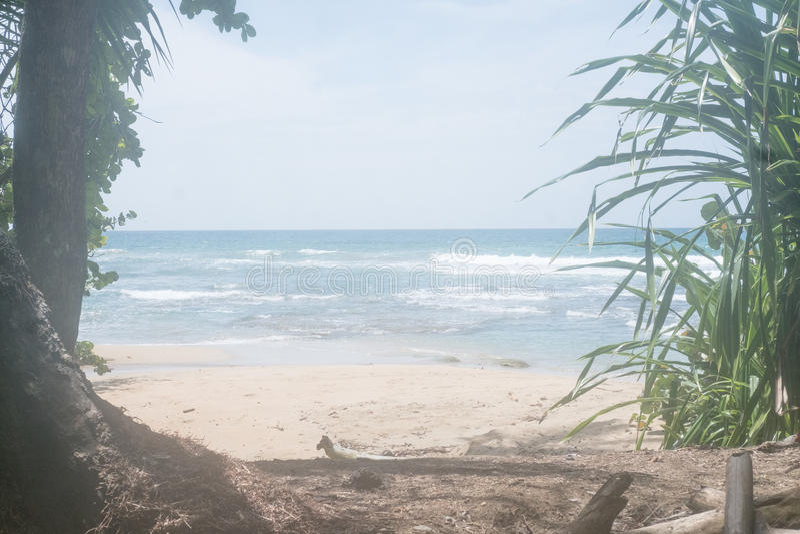 Chuva das caraíbas Forest Beautiful das árvores das férias de Costa Rica Ocean Water Beach Paradise foto de stock royalty free