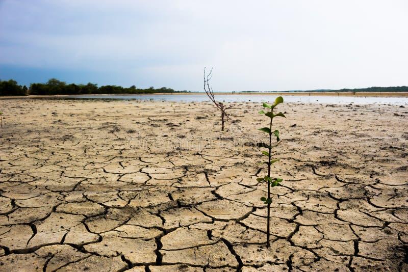 Download Chuva de espera à terra foto de stock. Imagem de água - 65580898