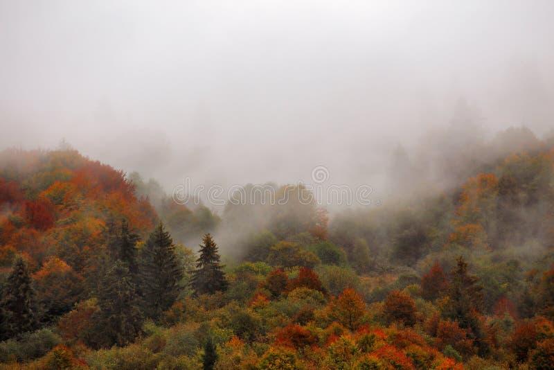 Chuva do outono na madeira colorida da floresta da montanha nas nuvens da névoa imagem de stock royalty free