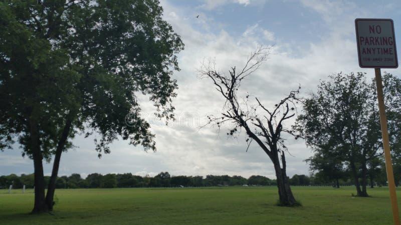 Chuva no parque foto de stock royalty free