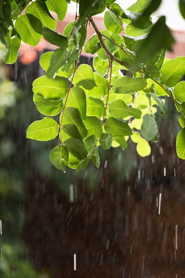 Chuva pesada sobre a árvore verde backlighted fotografia de stock