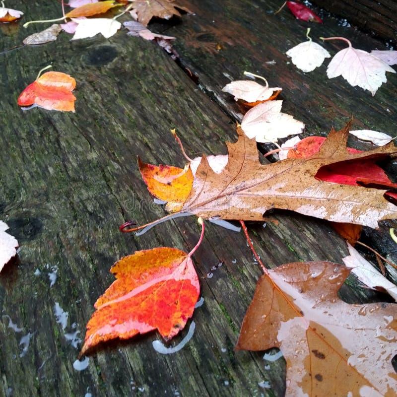 Chuvoso, dia do outono imagens de stock