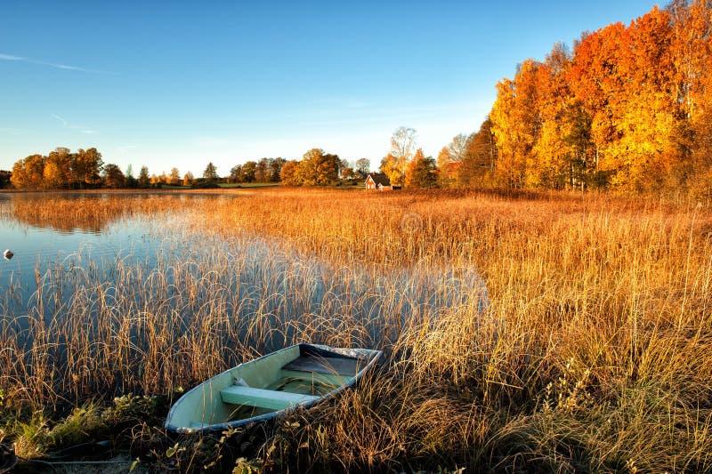 Chwalebnie jesień ranek fotografia royalty free